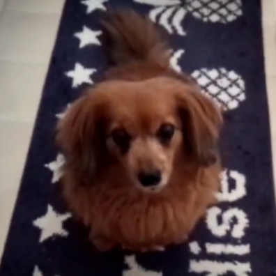 もしも犬(ワンちゃん)に、九州由来菓子「なんばん往来」あげたら・・・